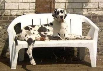 Chien sur banc